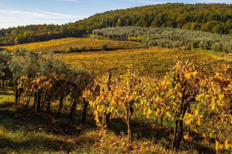 Download 葡萄园和橄榄树全景风景 库存图片. 图片 包括有 五颜六色, 天空, 种田, 欧洲, 横向, 绿色, 没人 - 62527757