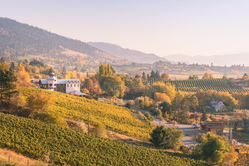 葡萄园和酿酒厂看法Naramata长凳的在日落在秋天 免版税库存照片