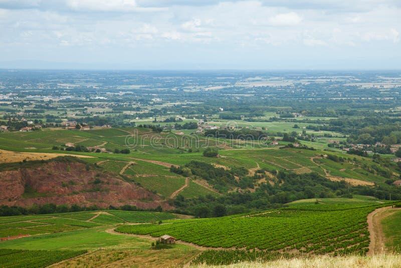 葡萄园在博若莱红葡萄酒,法国的酿酒区域 免版税图库摄影