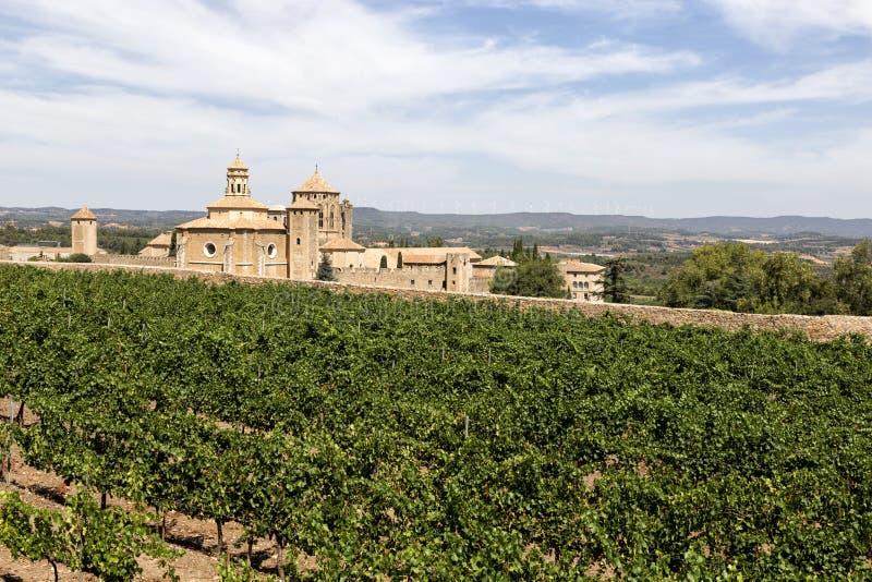 葡萄园在圣玛丽亚de Poblet修道院,加泰罗尼亚,西班牙里 库存照片