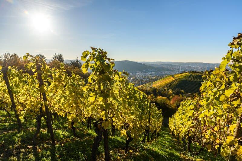 葡萄园在斯图加特-在德国的南部的美好的酒区域 库存照片