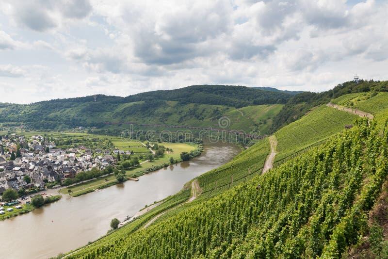 葡萄园在沿河摩泽尔的德国在Punderich附近 库存图片