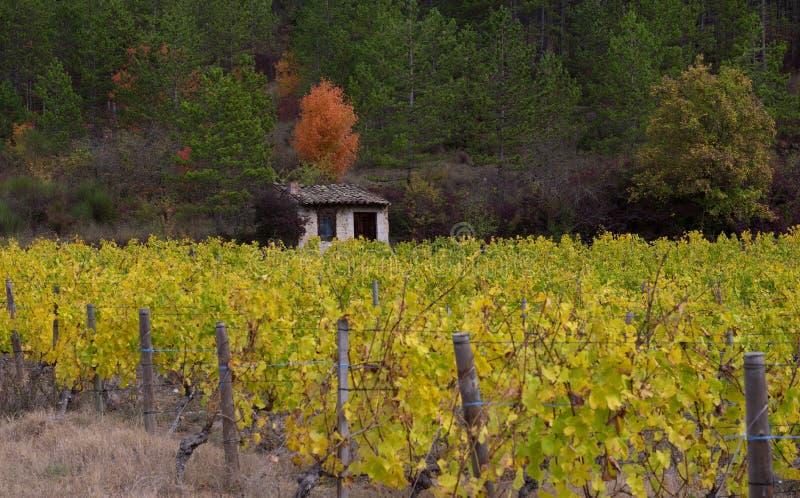 葡萄园在法国乡下, Drome, Clairette de Die 库存照片