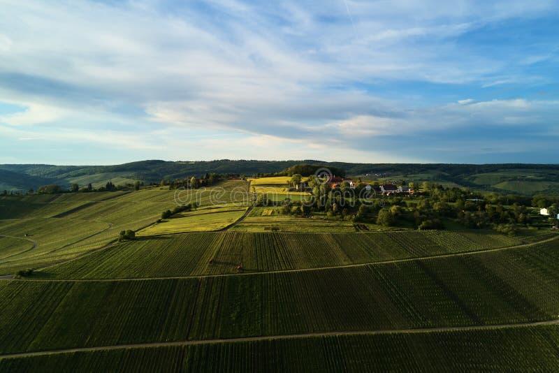 葡萄园在从上面的小山环境美化与寄生虫, dji 免版税库存图片