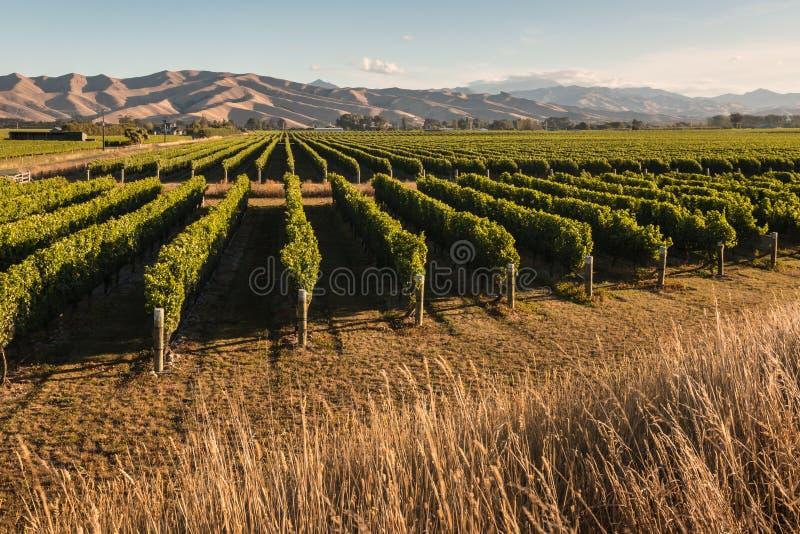 葡萄园在Marlborough,新西兰中 免版税库存照片