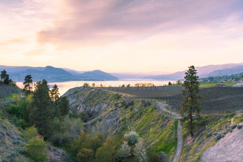葡萄园日落视图,欧肯纳根湖和山从水壶谷路轨在春天落后 免版税库存图片