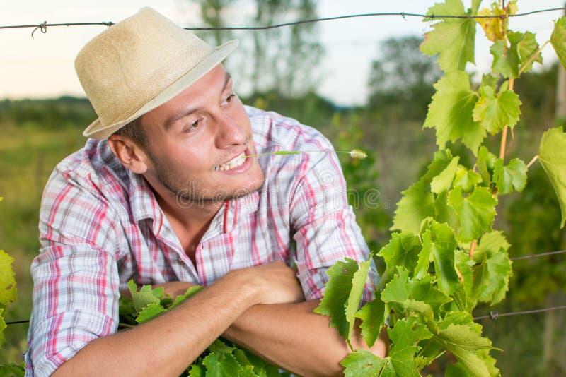 葡萄园的愉快的年轻农夫 免版税库存图片