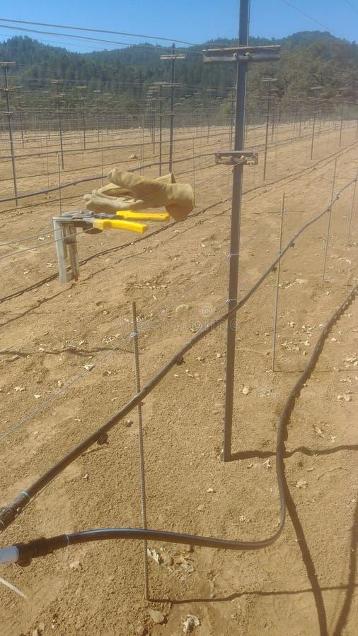 葡萄园的灌溉 免版税库存照片