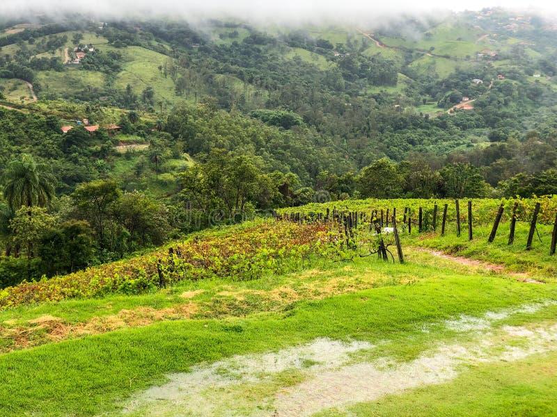 葡萄园的顶视图山的在多云下雨的季节期间 库存照片