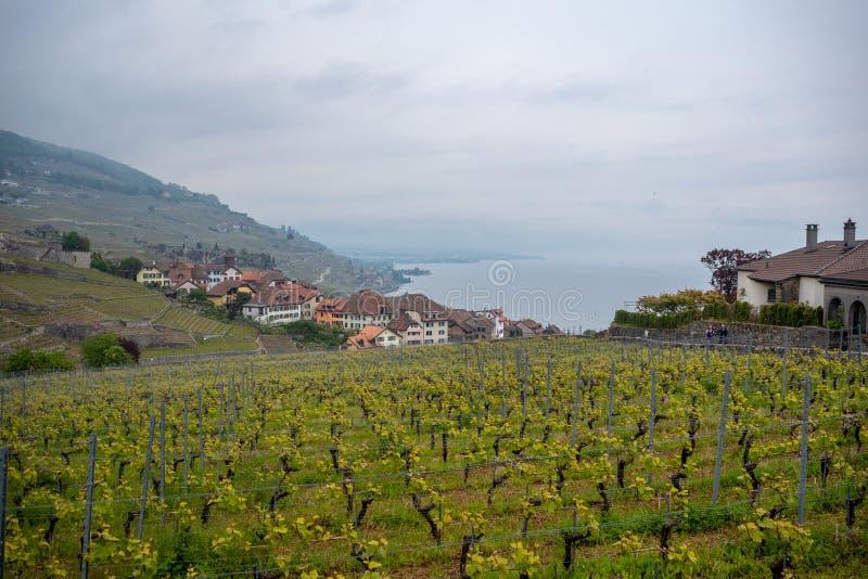 葡萄园美丽的景色在瑞士的乡村多云天空、葡萄酒房子和湖背景的 图库摄影