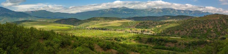 葡萄园美好的夏天全景克里米亚半岛半岛山的  免版税图库摄影