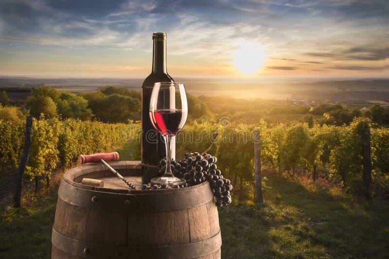 葡萄园背景下的红葡萄酒依然 库存图片