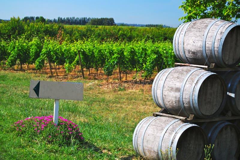 葡萄园藤葡萄酒桶和标志 免版税库存图片