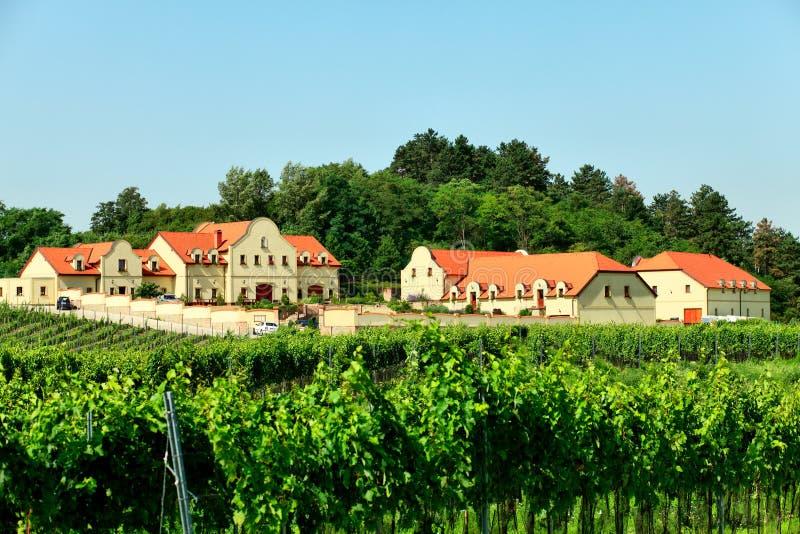 葡萄园酿酒厂 库存照片