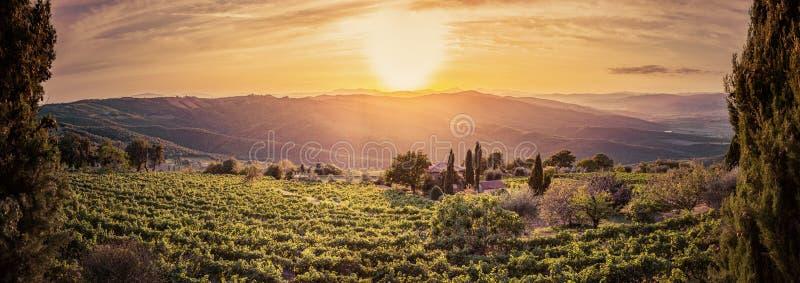 葡萄园风景全景在托斯卡纳,意大利 日落的酒农场 库存图片