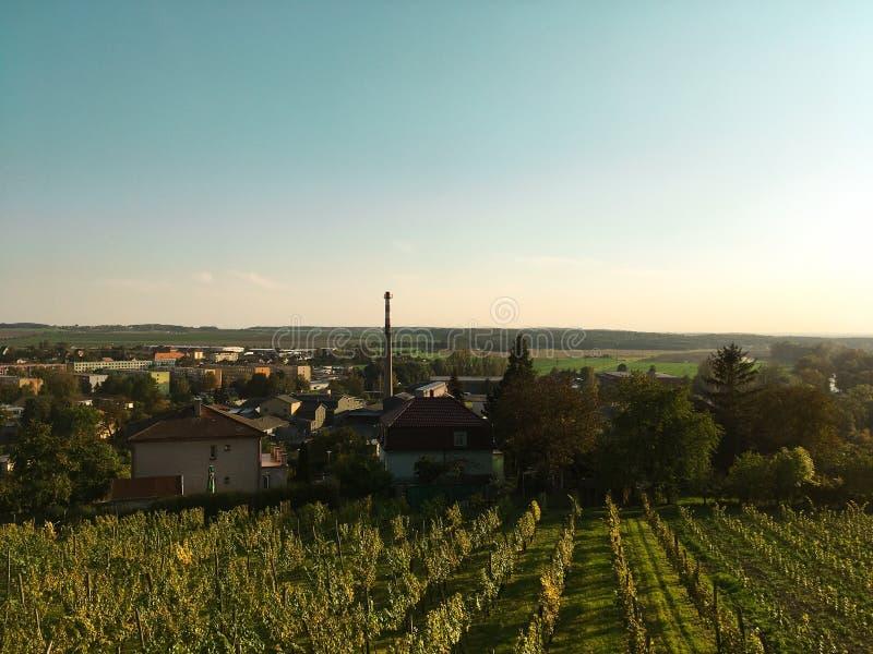 葡萄园风景在夏天 库存图片