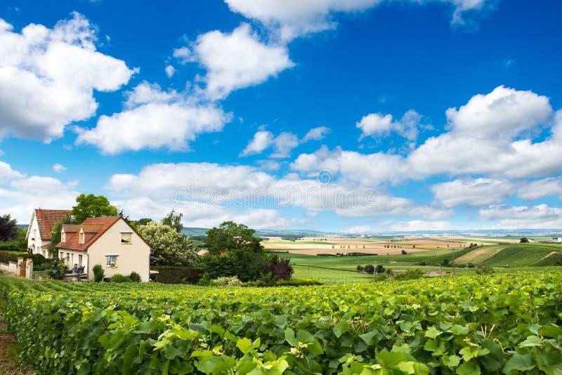 葡萄园风景在法国 免版税库存图片
