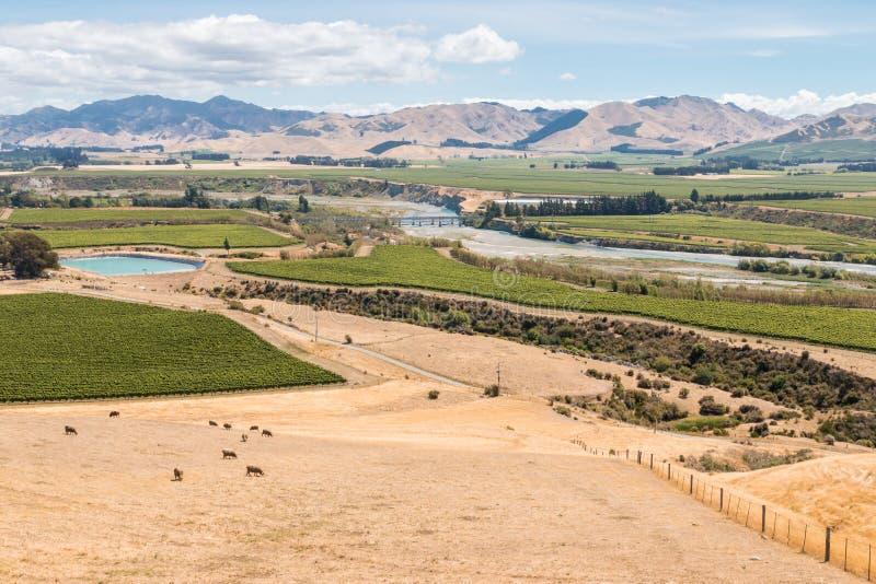 葡萄园鸟瞰图Awatere谷的在新西兰 免版税库存图片