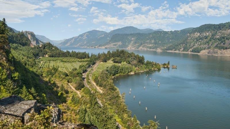 葡萄园&果树园在哥伦比亚河峡谷 免版税库存图片