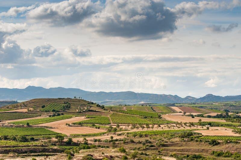 葡萄园skyine在Rioja,西班牙 免版税图库摄影