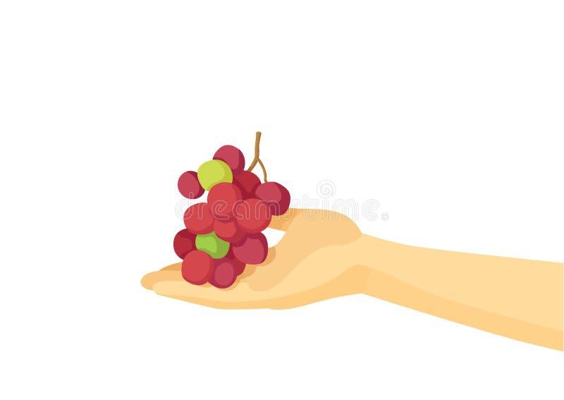 葡萄在人的手和被隔绝的设计动画片上 库存例证