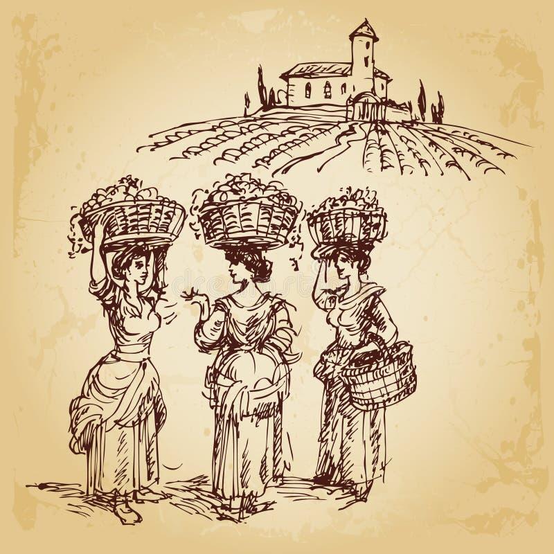 葡萄收获三名妇女 向量例证