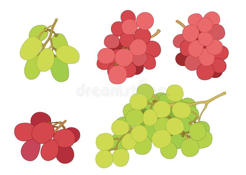 葡萄无核小葡萄干和葡萄干果子新鲜在白色背景 皇族释放例证