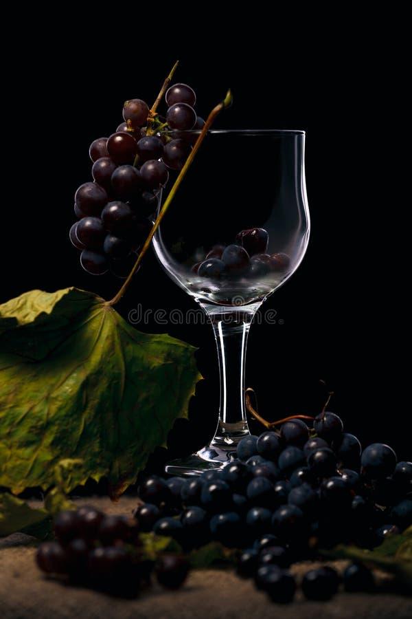 葡萄是果子,植物莓果,开花植物类葡萄属的落叶木质的藤 库存图片