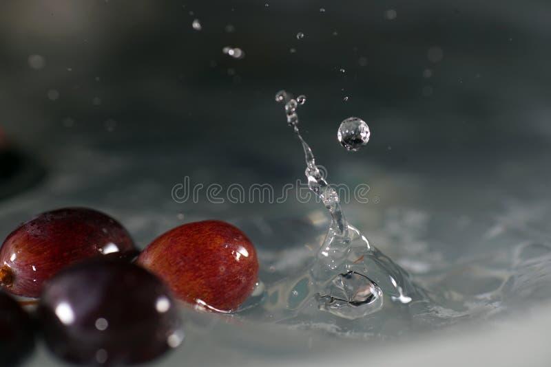 葡萄是葡萄树的果子 图库摄影