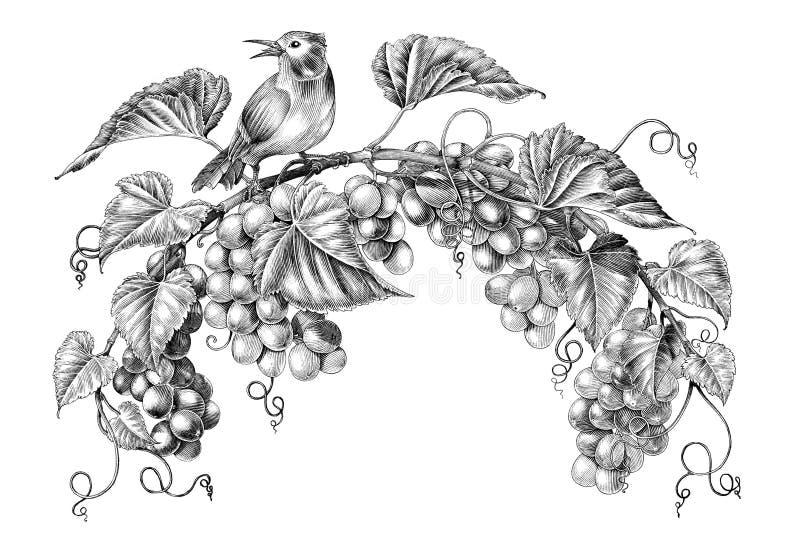 葡萄枝杈的古色古香的刻记的例证在白色背景有一点鸟黑白剪贴美术的隔绝的 向量例证