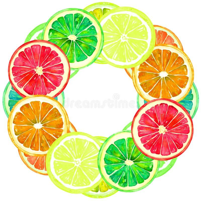 葡萄柚、桔子、石灰和柠檬、圆的双幅字盘架的贺卡或横幅设计 皇族释放例证