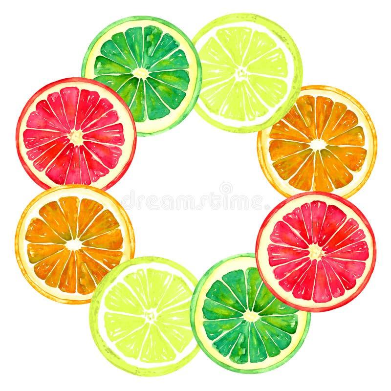葡萄柚、桔子、石灰和柠檬、圆的框架的贺卡或横幅设计 库存例证