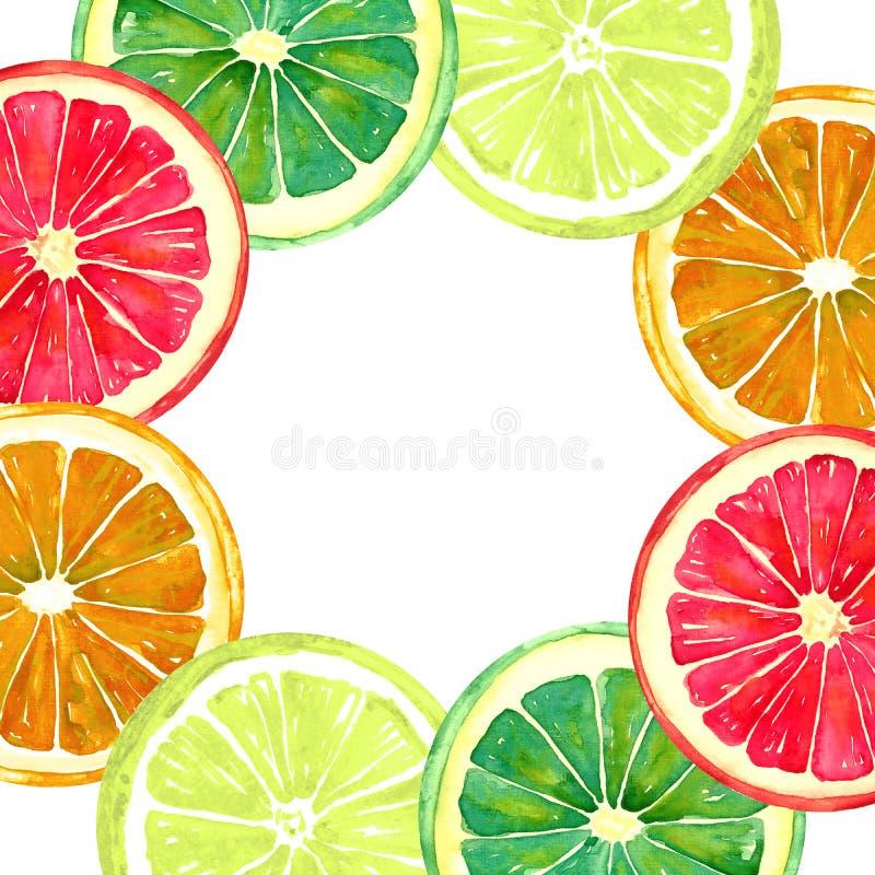 葡萄柚、桔子、石灰和柠檬、圆的贺卡或者横幅设计 向量例证