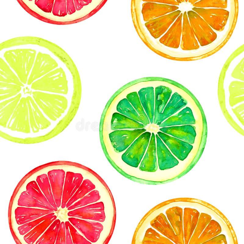 葡萄柚、桔子、石灰和柠檬在白色背景 库存例证