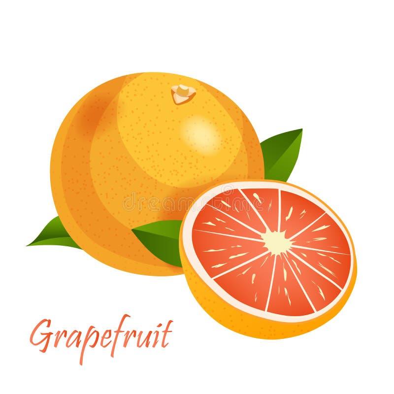 葡萄柚传染媒介在白色隔绝的象征例证 向量例证