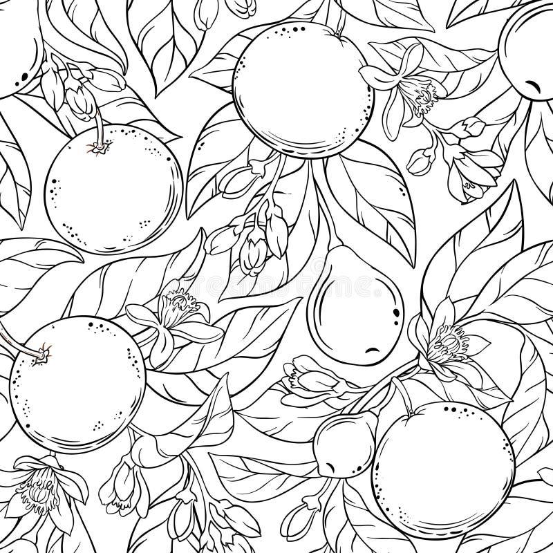 葡萄柚传染媒介样式 库存例证