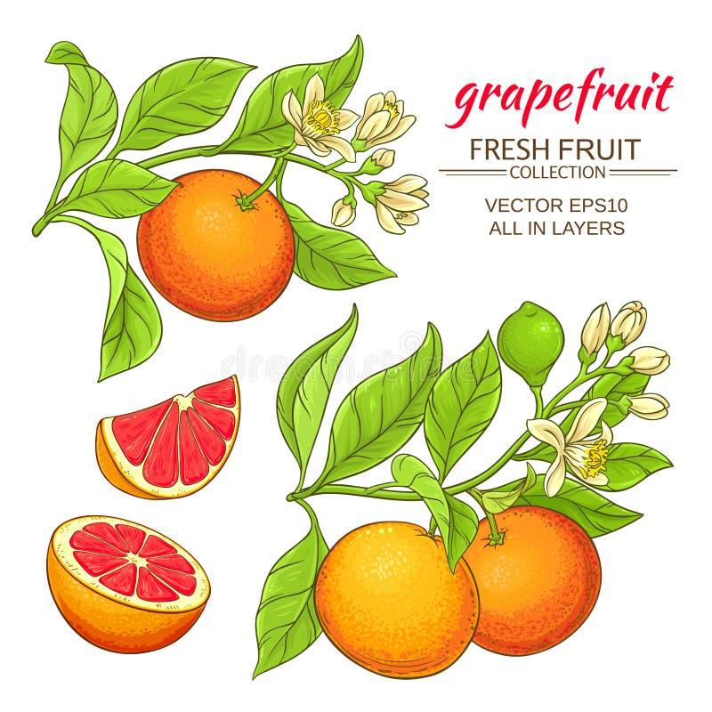 葡萄柚传染媒介集合 向量例证