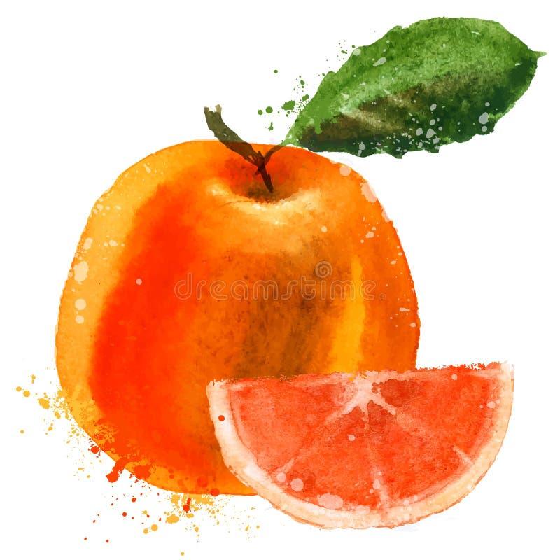 葡萄柚传染媒介商标设计模板 果子或 皇族释放例证