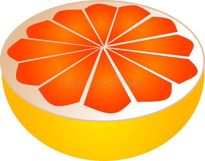 葡萄柚切了 库存例证