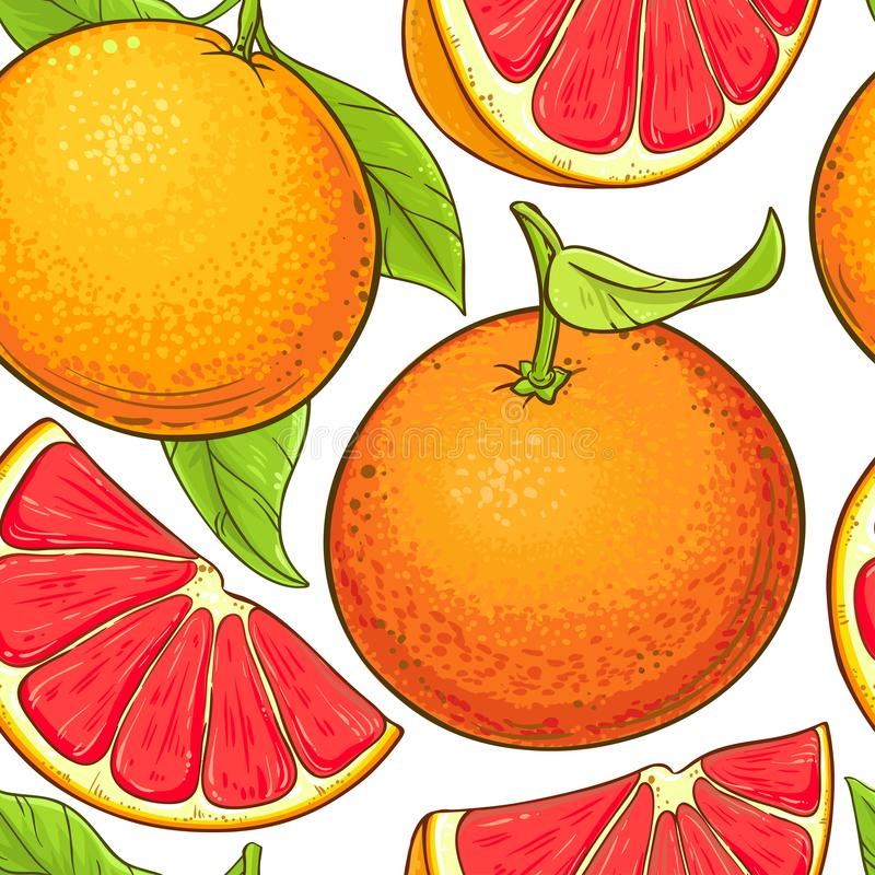 葡萄柚果子导航样式 向量例证