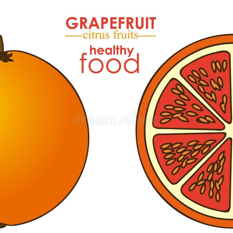 葡萄柚柑桔 向量例证