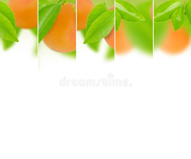 葡萄柚混合 库存照片