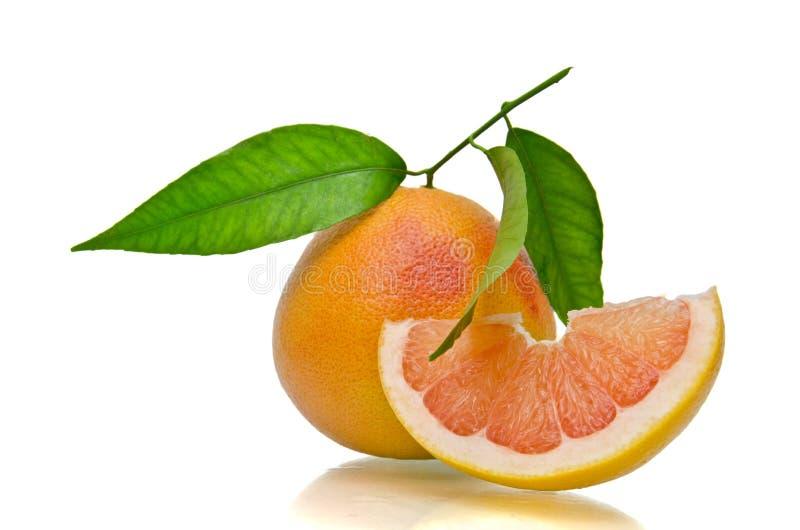 葡萄柚片式 免版税图库摄影