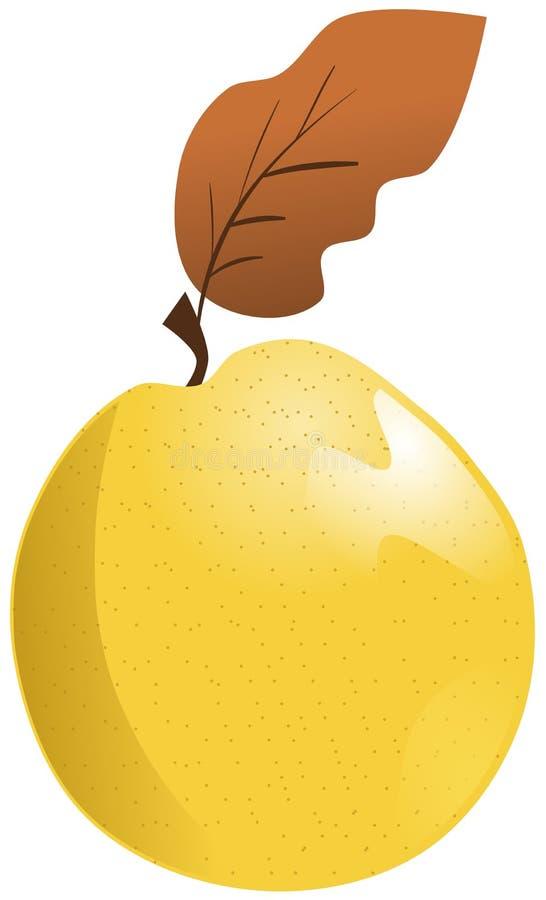 葡萄柚被隔绝的剪影  向量例证