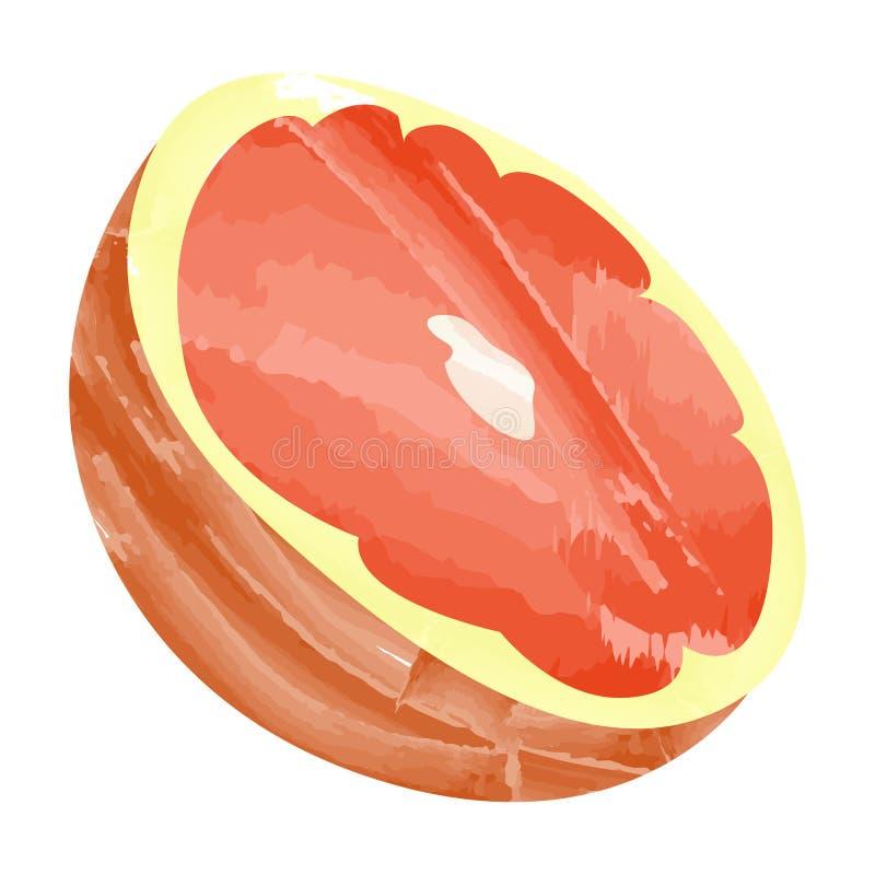 葡萄柚裁减 库存例证