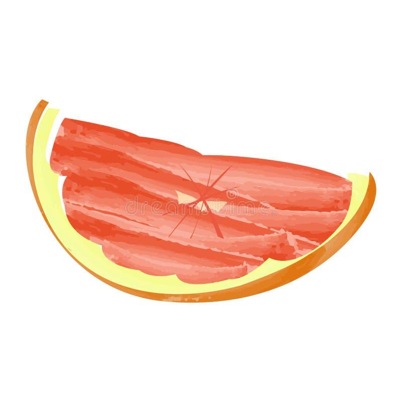 葡萄柚裁减 向量例证