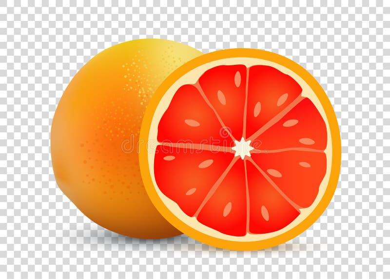 葡萄柚透明背景-成熟鲜美甜现实果子的传染媒介例证 库存例证