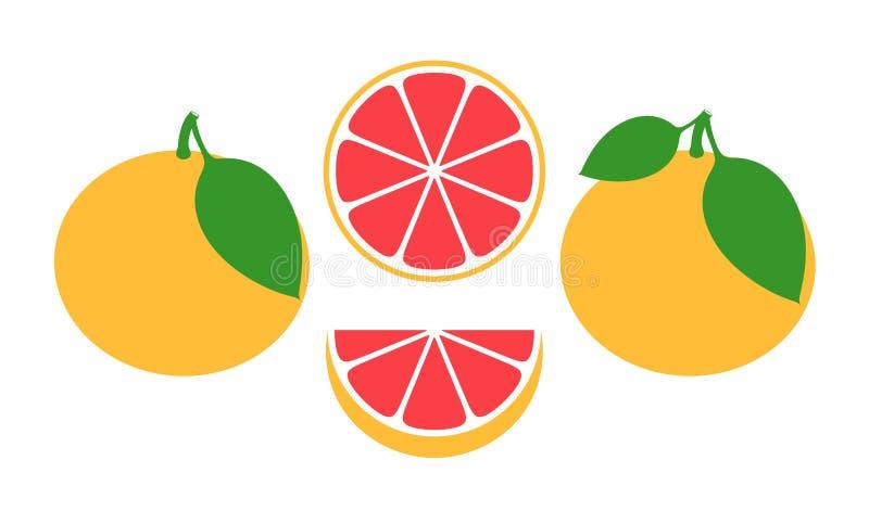葡萄柚集合 在白色背景的被隔绝的葡萄柚 库存例证
