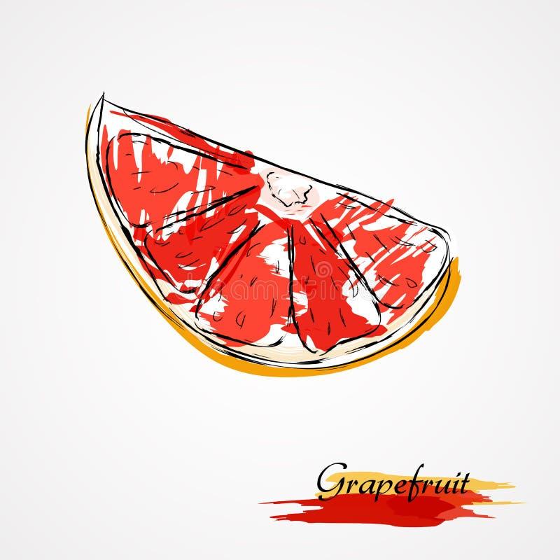 葡萄柚 库存例证