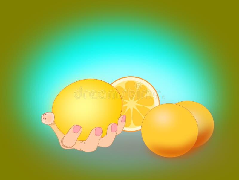 葡萄柚 向量例证